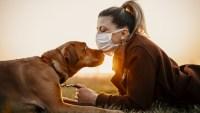 ¿Perros contra el coronavirus? Estudian si pueden detectar la enfermedad