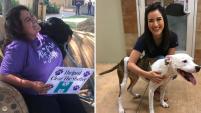 Más de 80,000 mascotas fueron adoptadas de costa a costa