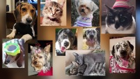 Este 20 de febrero se celebra el día de amar a tus mascotas. Estas son algunas de las fotos enviadas por nuestra familia de seguidores de Telemundo...