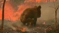 Una mujer salvó al marsupial durante un incendio forestal en Australia.