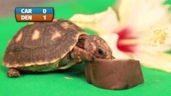 Tortugas de Moody Gardens