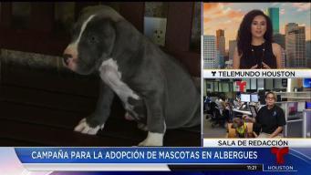 Campaña par adopción de mascotas en albergues