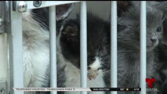 Fomentando la adopción de mascotas y educando a dueños