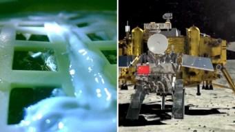 Algodón en la Luna: muere la única semilla que brotó