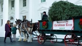 Casa Blanca: Melania recibe su primer árbol navideño