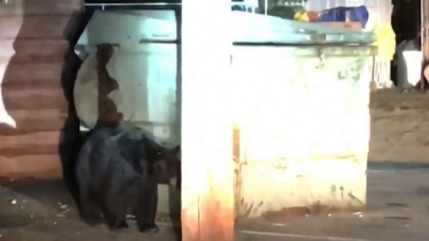 [TLMD - NATL] Ternura extrema: osos intentan rescatar a cachorro atrapado en basurero