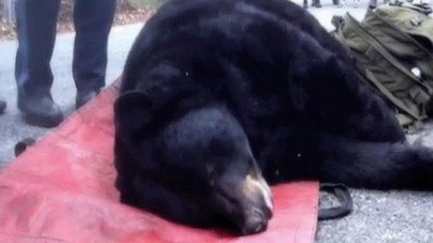 Video: Encuentra a un oso dormido en un sótano