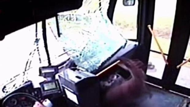 Video: Ciervo atravesó cristal y se coló en el bus