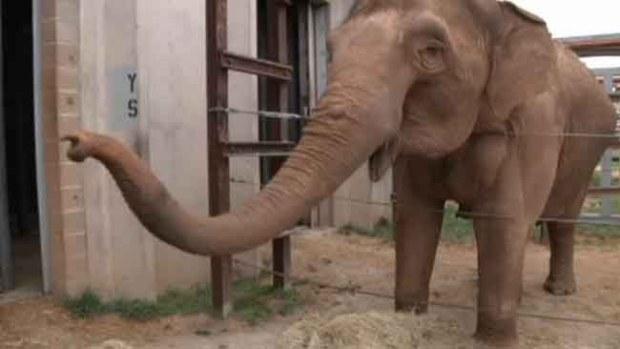 Video: Muere tras ser atacado por un elefante