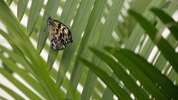 """El maravilloso """"beso"""" de una mariposa"""