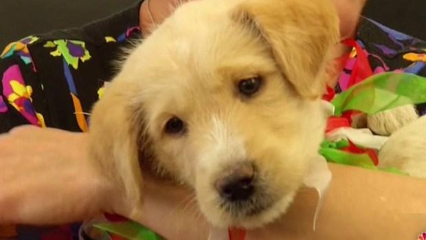 Video: Adoptan a perrito rescatado de drenaje