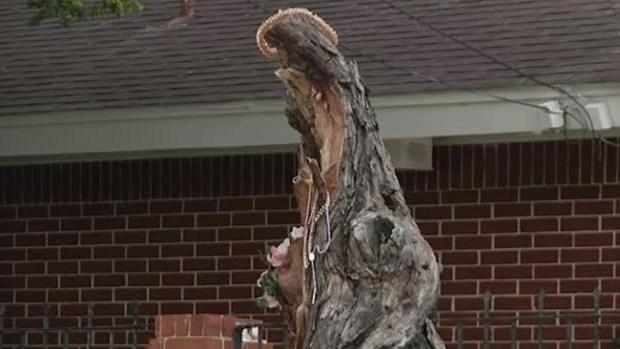 Video: Dicen que apareció la virgen en un árbol