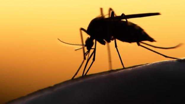 Se reportan cuatro nuevos casos de zika nativo en Texas