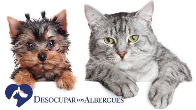 """Desocupar Los Albergues: el """"adoptómetro"""" de mascotas"""