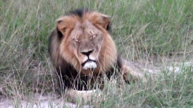 Informan que mataron a hermano de león