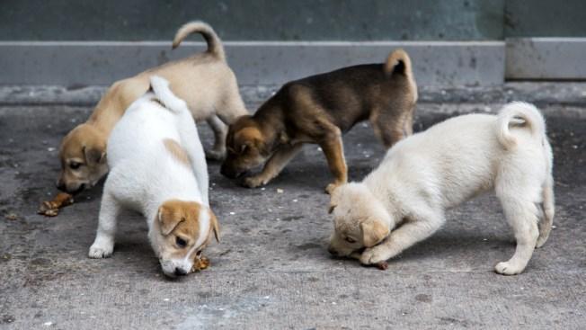 Amenazan con matar a miles de perros en China
