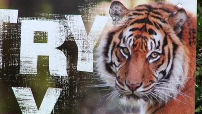 Tigre mata a empleada de zoológico en su jaula