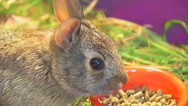 """Di """"No"""" a regalar conejos en Pascua"""
