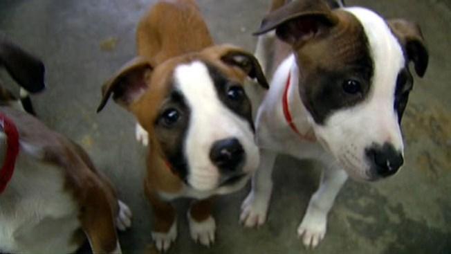 Perros en Texas, sin valor económico