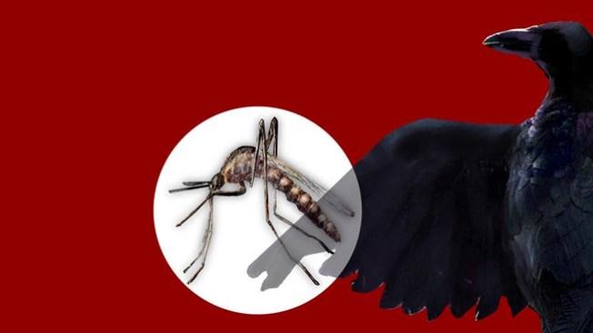 Pican, pican los mosquitos