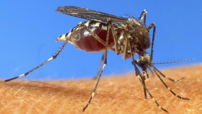 Dos muertes por virus del Nilo