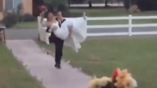 La épica caída de unos recién casados