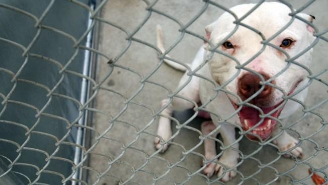 Pit Bull envía a niña de 2 años al hospital