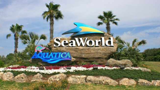 Arrestan 5 por irrumpir en Seaworld