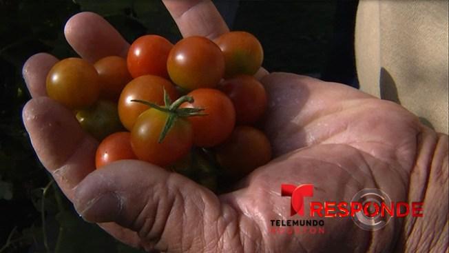 Aproveche los jardines comunitarios