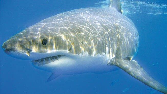 Tiburón deja malherido a bañista